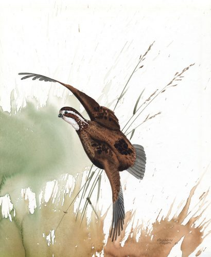 Quail-watercolor-by-Terrance-Taylor-17×20-price-185